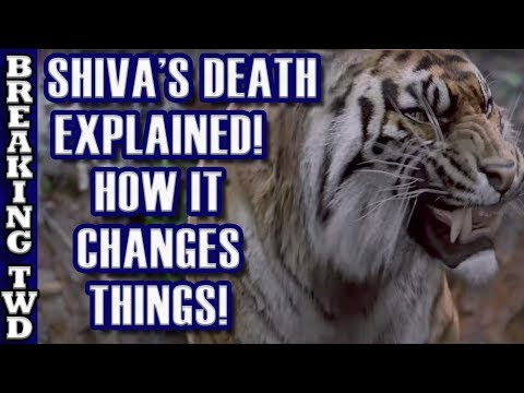 "Shiva's Death EXPLAINED | ""Some Guy's"" Tiger 