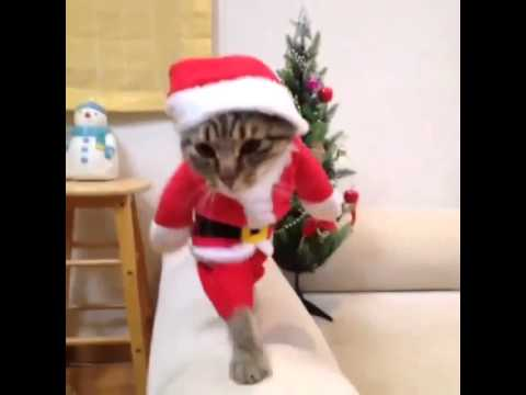 Cute cat in christmas outfit - YouTube
