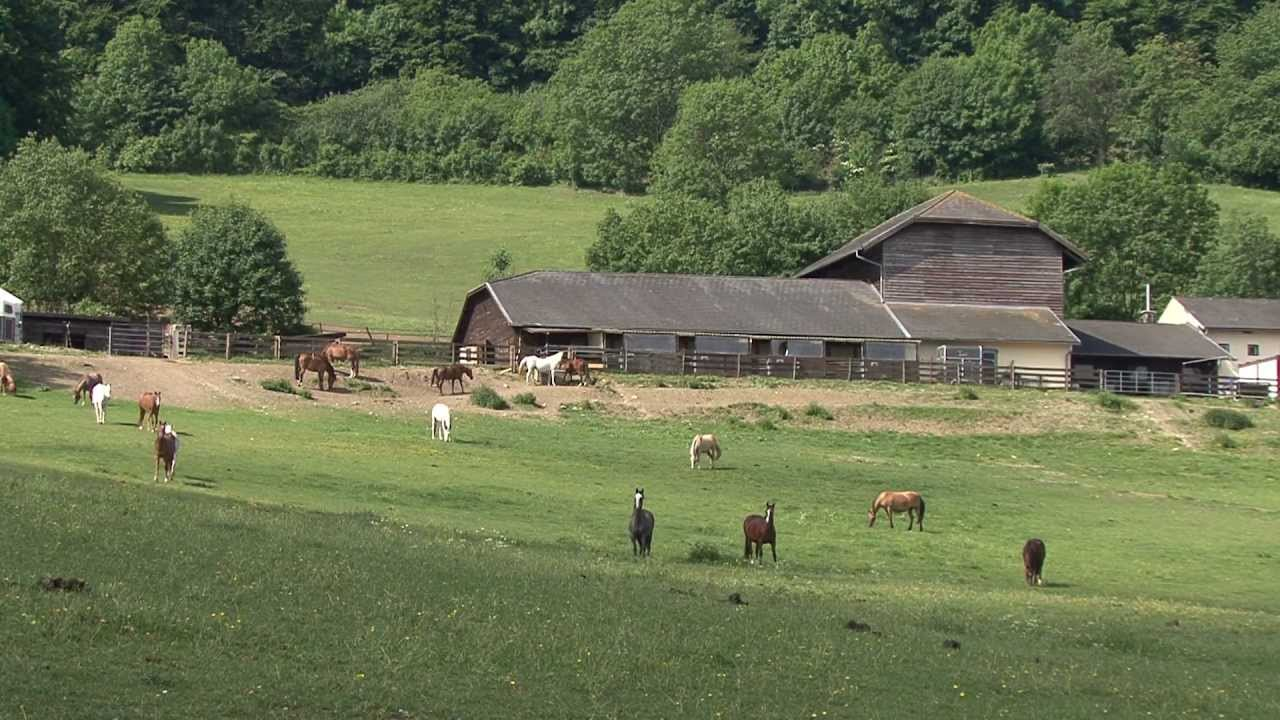Golden horse ranch youtube for Horse farm