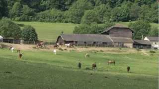 Golden Horse Ranch
