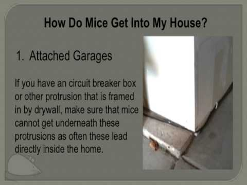 How Do Mice Get Into My Home Youtube