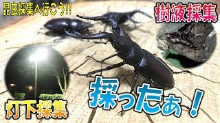 クワガタ&カブトムシ☆昆虫採集2017 採ったぁ! 灯下採集と樹液採集】(...