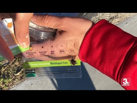 Tick population growing in Omaha as weather warms up
