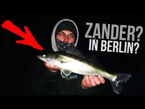 Zanderangeln bei Berlin | Drop Shot | hechtundbarsch.de
