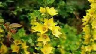 Tall Yellow Flower