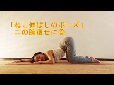 「ねこ伸ばしのポーズ」二の腕痩せに◎【健康】【ダイエット】
