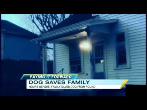 Dog Saves the Lives of Family That Adopted Him