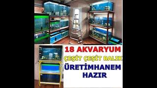 Akvaryum üretim  odam balık üretim hanesi #akvaryum #balıküretimhanesi