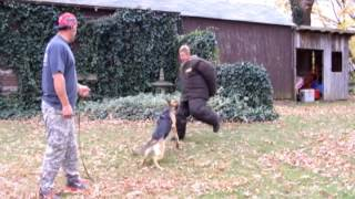 Leddger Williams The Basics Obedience And Protection Level 1
