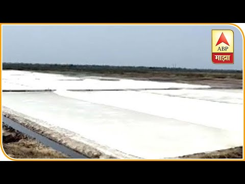 Salt Production लॉकडाऊनमुळे मीठ उत्पादकांचं लाखोंचं नुकसानपावसापर्यंत मजूर नसल्यास मेहनत वाहून जाणार