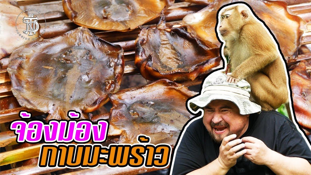 จ้องม้อง กาบมะพร้าว   IMBRICATED STINGRAY Coconut shell