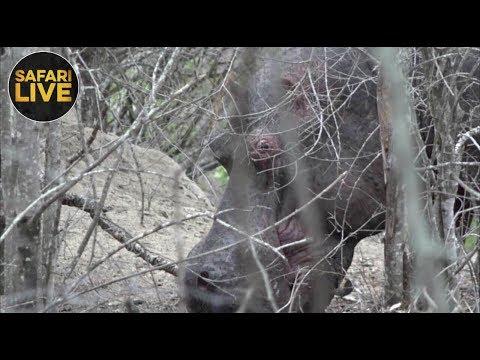 safariLIVE - Sunset Safari - November 7, 2018