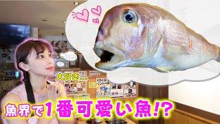 魚界No.1の愛嬌があるお魚!妹のお顔ついに公開・・・?