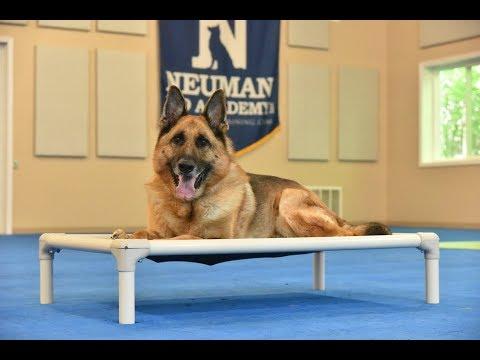 Flynn (German Shepherd Dog) Boot Camp Dog Training Video Demonstration