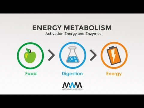 MWM 2.2: Activation Energy and Enzymes