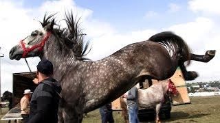 Uimitor cal