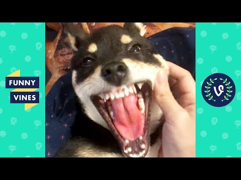 TRY NOT TO LAUGH - Cutest Pets & Funny Animals of The Week!