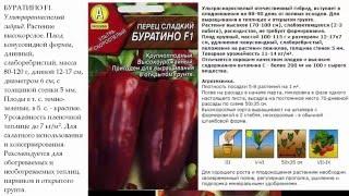 видео перец геркулес f1: отзывы огородников, фото, урожайность сорта