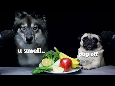 Wolf Dog Reviews Food With Pug!