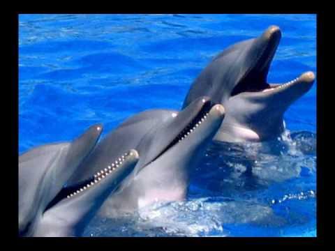 Stephen Schlaks  El delfin azul  YouTube