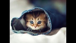 【厳選】みんながカワイイと認めた猫、犬の行動 チャンネル登録お願いし...
