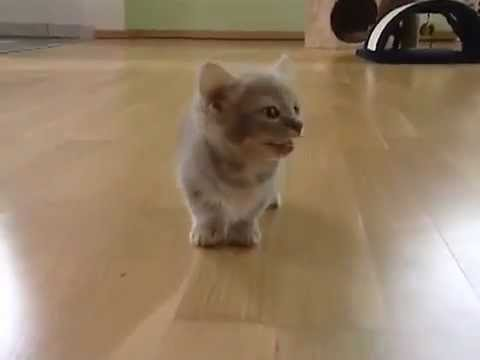 The Cutest Kitten In The Universe!!! - YouTube