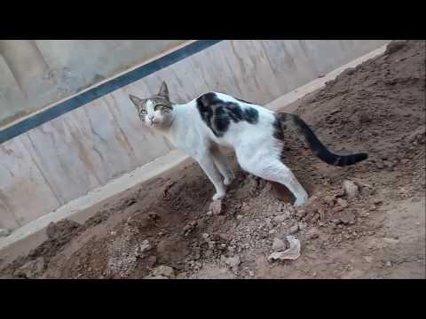 cat grooming san diego