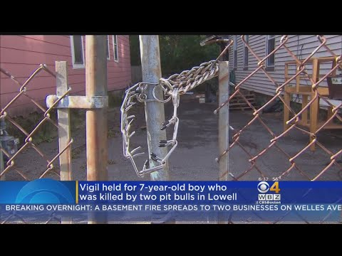 State Launches Investigation After Child Killed In Lowell Dog Attack