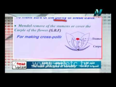 علوم لغات - اعدادية : Unit Three : Lesson 1, The main principles of heredity