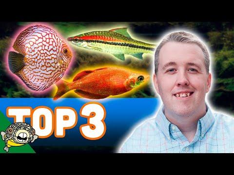 Our Top 3 Aquarium Fish from my store Aquarium Co-Op Located in Edmonds Washington.