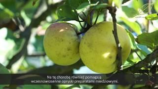 Drzewa owocowe - jabłoń, brzoskwinia- walka ze szkodnikami i chorobami na drzewach