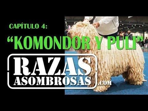 Razas Asombrosas, Capítulo 4: Komondor & Puli
