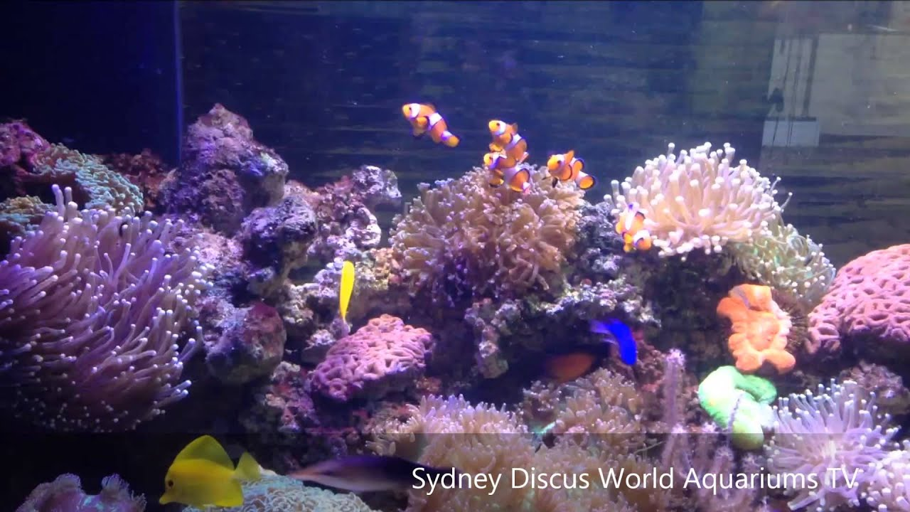 Hd Gorgeous Sydney Marine Tank Installation Custom Fish Installations Australia You
