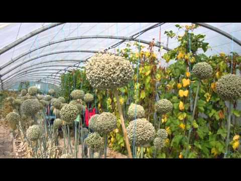 Seed Grower Networks