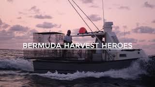 Bermuda Harvest Heroes