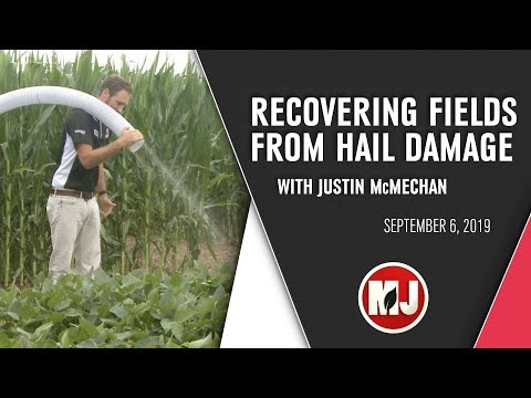 Helping Fields After Hail Damage | September 6, 2019