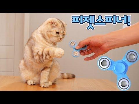 피젯 스피너를 본 고양이들 반응은?
