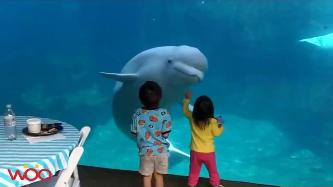 Cum reactioneaza copii la Zoo :)) Faze comice amuzante (mori de ras)