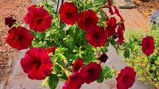 Plantas Que Você Mesmo Pode Cultivar No Seu Jardim