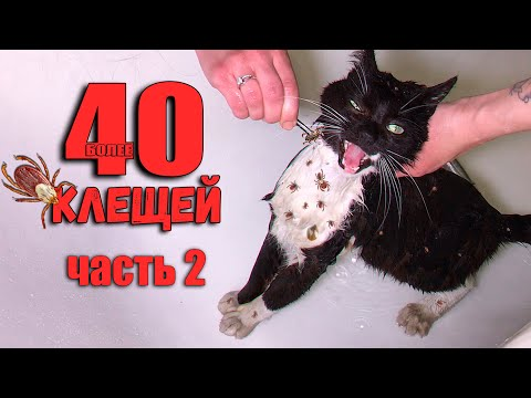 Спасение кота от клещей 2. Чем закончилась эта история? / SANI vlog