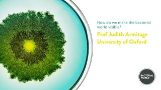 How do we make the bacterial world visible?