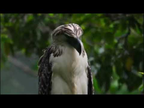 Best Birds Chirping Sound Effects Best Birds Songs in the early Morning Birds Sound for Relaxation