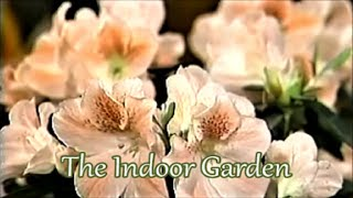How to Keep an Azalea Indoors