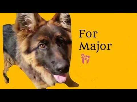 🎁 For Major 🎁 ~ Fight Song