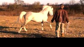 The Gentle Spirit Of A World-Class Horse Trainer