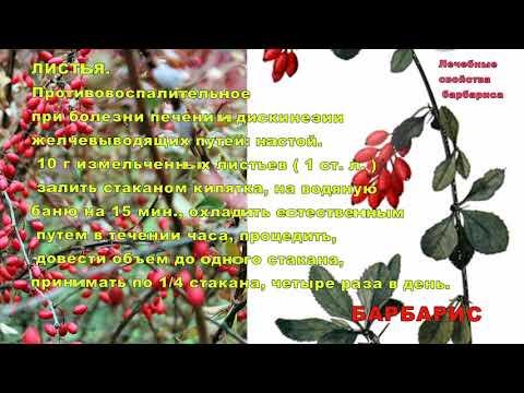 Барбарис – полезное украшение сада. Лечебные свойства барбариса