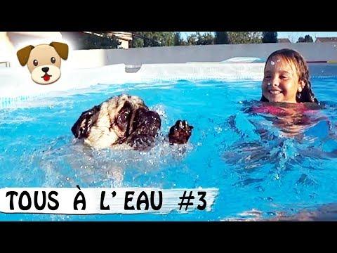CHIENS À L'EAU #3 : JADOU AIME LA PISCINE / Family Vlog / Car Talk