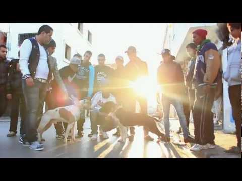 FRANKY - ZAMA9TEL  [Clip Officiel HD]