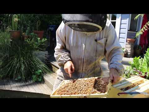 A Day With An Australian Beekeeper