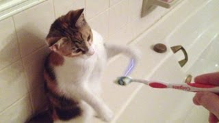 Cat gets shocked by a toothbrush